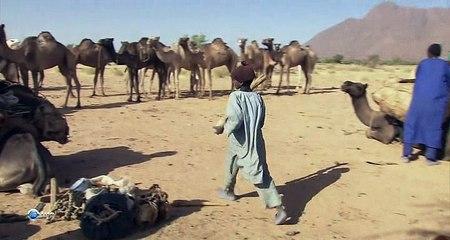 Переход через пустыню Сахара / Crossing the Great Sahara: The 800 Mile Journey of a Camel Caravan [2001, HDTVRip]