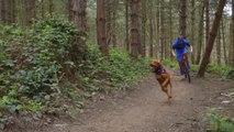 Ce chien court aussi vite que son maître à vélo !! Descente VTT !