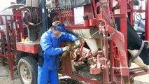 El calzar vaca mundo moderno Tecnología automática y limpieza de la máquina de fábrica Mega sobre R