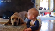 Cute Dogs and Babies Crawling Together - Adorable babies Compilat