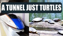 Japan construct tunnels for turtles to pass safely at railway tracks | Oneindia News