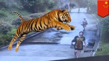 Cheapskate tourists sneak into zoo, nearly end up as tiger feed