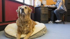 Where 'Bring Your Dog To Work' Day Is Every Day