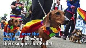 Dogs Celebrating Pride 2017