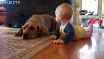 Cute Dogs and Babies Crawling Together - Adorable babies Compilation-IE