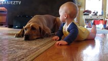 Cute Dogs and Babies Crawling Together - Adorable babies Compilation-IEEo5pIK