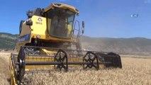 Güneydoğu'da Başlayan Buğday Hasadındaki Yüksek Rekolte Üreticinin Yüzünü Güldürdü