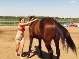 Un cheval vient en aide à sa cavalière qui galère à monter