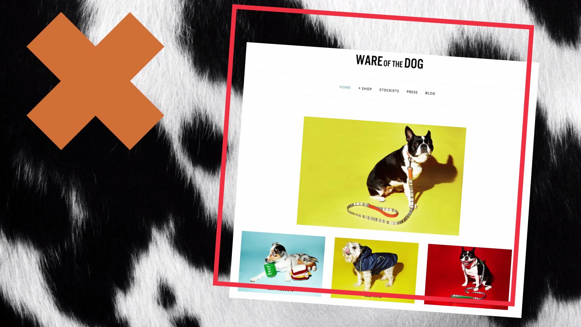5 Online Shops You and Your Dog Will Love