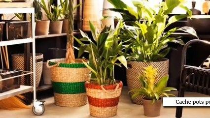 Des plantes d'intérieur dans ma déco !