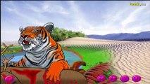 قصة النمور و الجمال - YouTube_(new)