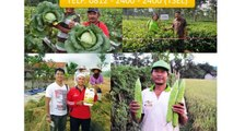 TELP. 0812 - 2400 - 2400 (TSEL) Obat Tanaman Tembakau