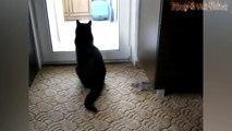 Funny Cats And Rats - Cats Vs Rats - Rats Attacking Cats Compila