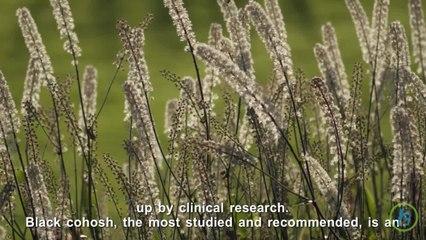 Best Herbs to Treat Menopause