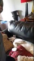Il padrone chiede all'Husky di fargli spazio sul divano. La risposta del cane è fantastica!