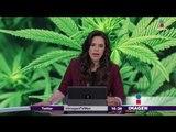 Aprueban uso medicinal de la marihuana en México | Noticias con Yuriria Sierra
