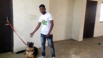 How To Train Your Dog to BARK , SPEAK & STOP BARKING in Hindi _ dog training in india