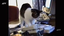 Funny, Clever Cats, Best Pation, Dog Tricks, Cat & Dogs, Pet Animals Agility