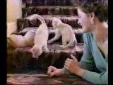 Kwiskas pour les Chats,Marrant
