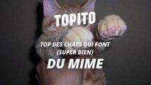 Top des chats qui font super bien du mime-OY-Sija2aCg
