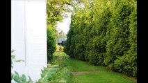 Reduce Road Traffic impacts    Use Green Giant Arborvitae