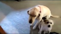 Funny Guilty  2016 ► Guilty Dogs