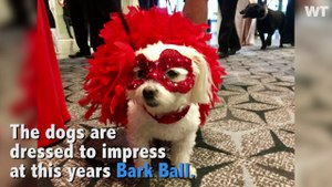 Dogs Strut Their Stuff at the 30th Annual Bark Ball