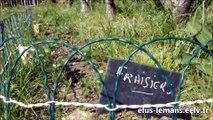 2017 La mi-temps d'un mandat - Samuel Guy : Les Jardins partagés s'ajoutent aux jardins familiaux