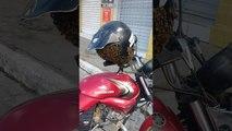 Un essaim abeilles dans un casque de moto (Brésil)