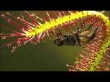 다큐동화 달팽이 - Dalgo_파리지옥_#002