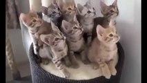 En Komik Kedi Videoları Kesin izle - SEVİMLİ KEDİ VİDEOLARI GÜLMEK GARANTİ