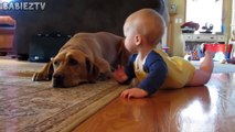 Cute Dogs and Babies Crawling Together - Adorable babies Compilatio