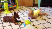 Cute Dogs and Babies Crawling Together - Adorable babies Compilation-IEEo5p