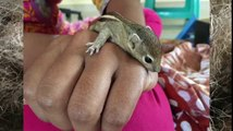 Four saved squirrels are recovered by their mother 4 days later