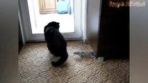 Funny Cats And Rat Rats Attacking Cats Compilati