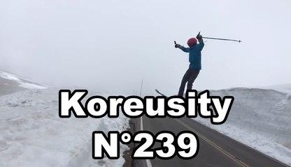 Koreusity n°239