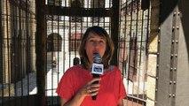 Fort Boyard : toutes les nouveautés de la saison 2017 avec Alexia Laroche-Joubert