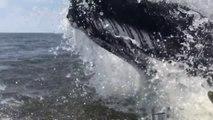 Une énorme baleine surgit à 1 mètre d'un bateau de pêcheurs !