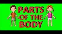 Cours danglais 18 - Les parties du corps en anglais La tête Le visage Vocabulaire pour en
