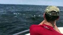 ¡Impresionante! Ballena emerge del agua y casi vuelca una lancha