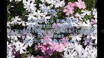 ファッションWORDS「オフショルダー」~前川原悠子