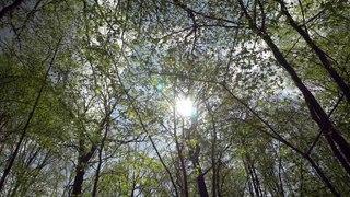 Le massif forestier de Chatillon (Tour de France de la biodiversité 7/21)