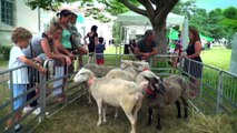 Salon de l'élevage et des saveurs 2017