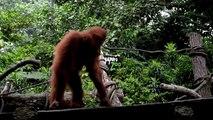 Le zoo de Singapour marque son 44ème anniversaire