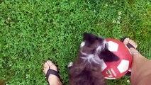 Ce chien adore jouer à la balle !