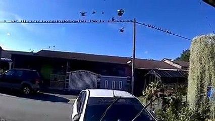 Siulan Burung-Burung