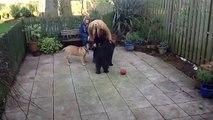 Funny dog vi