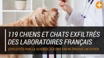 119 chiens et chats exfiltrés des laboratoires français