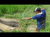 WOW! Amazing Man Shoot Fish Using Bowfishing In The Farm - Cambodian Shoot Fish Using Bowfishing