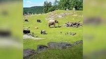 Cet éléphanteau est vraiment très mignon !